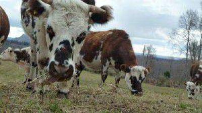 Productores lecheros incorporan genética
