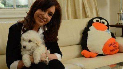 Cristina Fernández se realizará nuevos chequeos médicos
