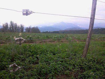 Aplicación de un impuesto de emergencia hace peligrar la cosecha de tabaco, alertó Giubergia