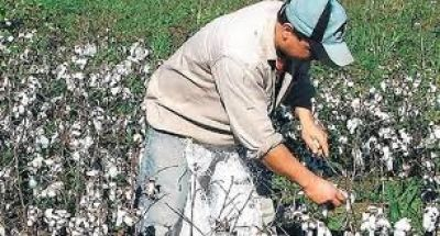 Algodón: Subsidio millonario para maquinarias