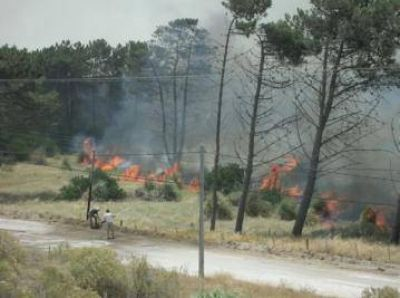 Incendio en el Vivero: hay escasos focos y se controla la situación
