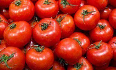 Aseguran que la importación de tomate perjudicará a productores mendocinos