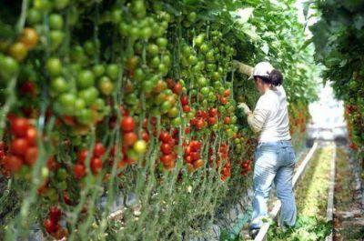 La importación tomatera afectará la Campaña 2014