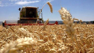 """La Mesa de Enlace calificó como """"falso"""" el anuncio de liberar exportaciones de trigo"""