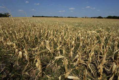 Un diputado pide derogar el aumento del impuesto inmobiliario rural