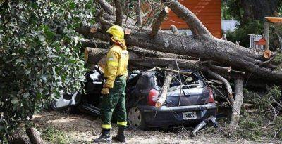 Joven muerta, caída de árboles, voladuras de techos y cortes de energía eléctrica como consecuencia de los fuertes vientos
