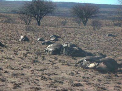 Incendios: algunos productores perdieron hasta 150 animales en Chacharramendi