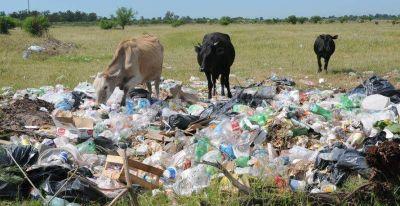 Rincón se prepara para diferenciar los residuos