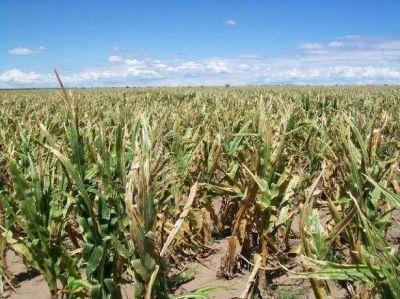 El calor azotó al maíz y la soja