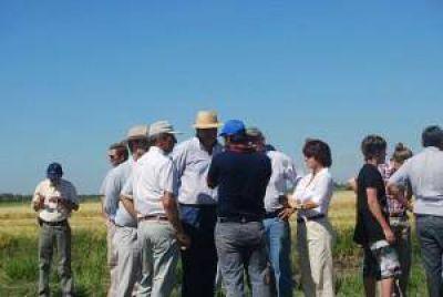 Quintana visitó la zona arrocera sur donde comenzó la zafra de unas nueve mil hectáreas