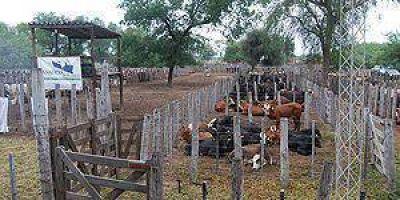 Las Lomitas: 1500 animales negociados