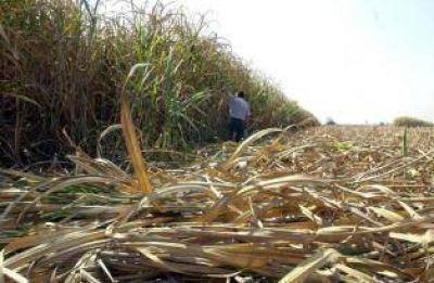 La Emergencia Agropecuaria llega al az�car