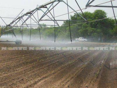 Chaco marca el camino en la producci�n de hortalizas pesadas