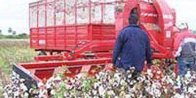 Habilitan hoy las primeras tres planchadas de acopio de algodón