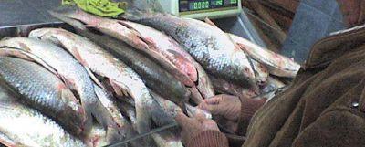 Choclos y pescados encarecen la canasta familiar