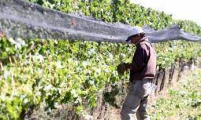 En plena vendimia, llegó el alivio para el sector vitivinícola