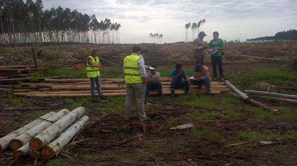 Detectan irregularidades laborales en industrias madereras