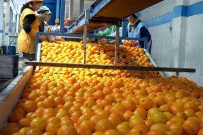 Brindarán ayuda financiera a la producción lechera y citrícola