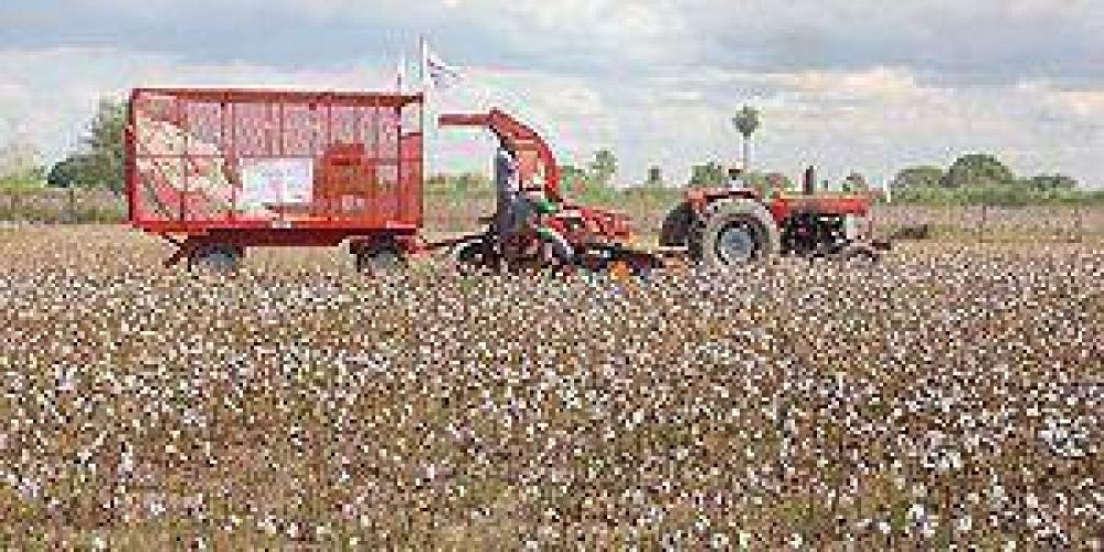 """Jornada de """"cosecha mecánica de algodón"""" en el interior"""