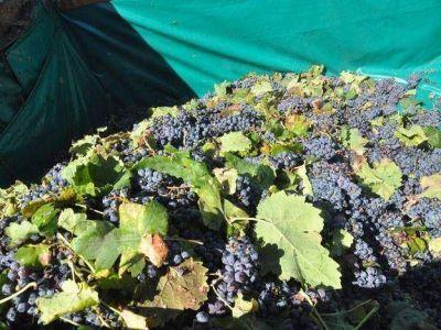 Colombia interesada en comercializar vinos y pasas de San Juan