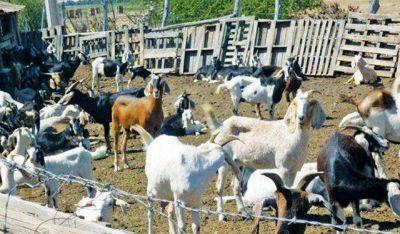 Licitarán la obra de electrificación rural para el desarrollo pecuario
