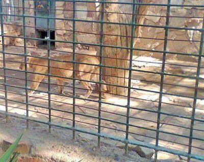 """Impulsan una """"movida solidaria"""" para el zoológico"""