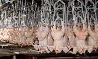 La Rioja podrá autoabastecer su consumo de carne avícola