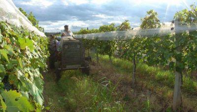 La lluvia complicó a los viñedos en la provincia