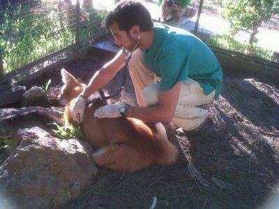 Incesante labor en defensa de las especies protegidas