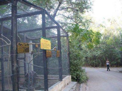 Drogaron con clonazepam a tres monos del zoo y se los robaron
