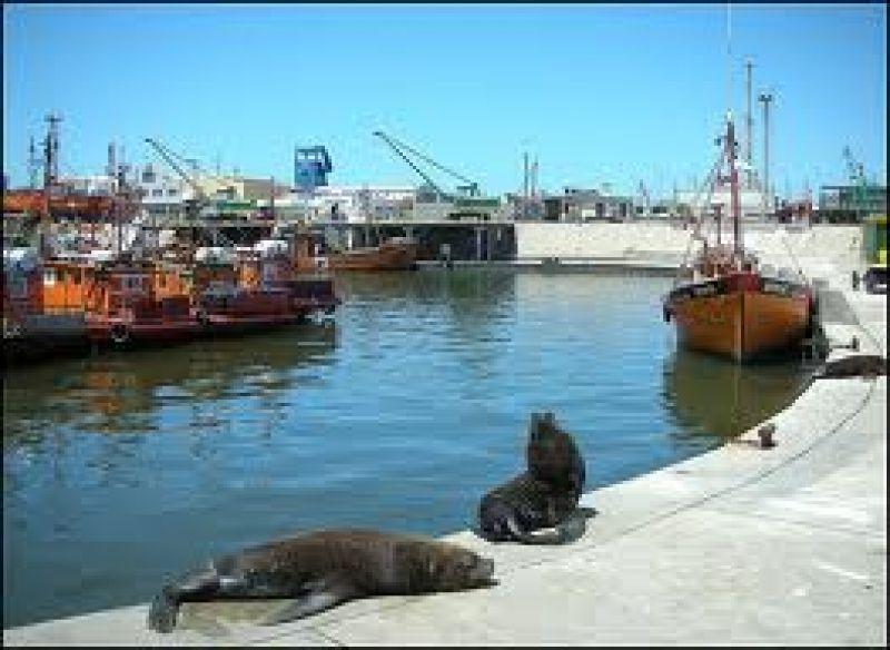 El SOMU aseguró que la actividad en el puerto es normal
