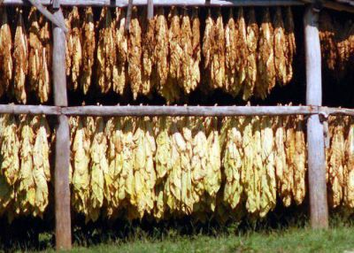 El tabaco continúa sin acuerdo de precios