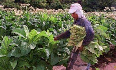 Tabacaleros: no se fijó el precio y endurecen las medidas
