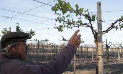 Se viene otro subsidio para cosechadores desocupados