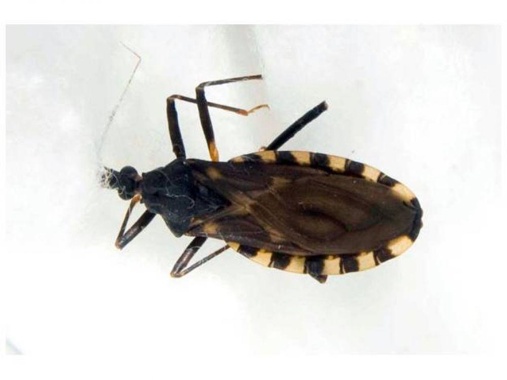 Harán gratis el test de Chagas en el Parque de Mayo
