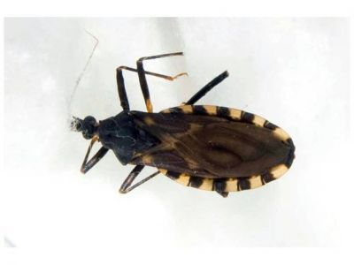 Har�n gratis el test de Chagas en el Parque de Mayo