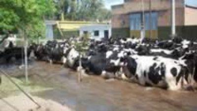 Productores lecheros reclaman asistencia