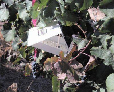 Para proteger al sur de plagas, destinan fondos para la recolección de la melesca