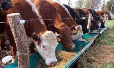 La Rioja vacunará 250 mil cabezas de ganado contra la aftosa