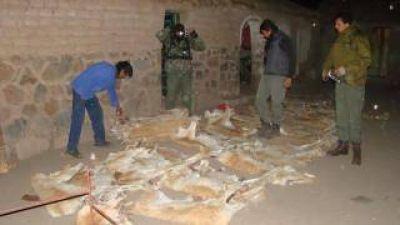Secuestran cuarenta y siete cueros de vicuña