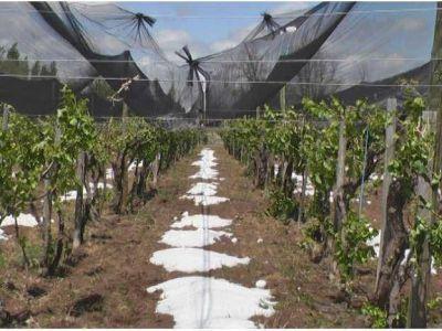 Se realizó el pago compensatorio de $1 millón a los productores que sufrieron daños climáticos