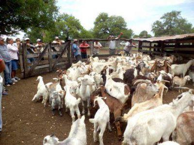 Ley Caprina: gestionan fondos para proyectos