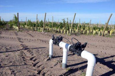 Casa de Piedra: regaron los viñedos de Catena Zapata con agua potable
