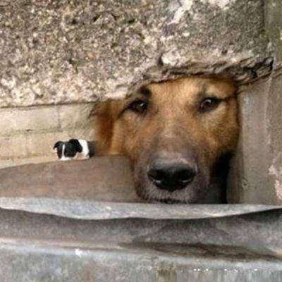 �Los derechos de los animales son los m�s vulnerados en La Rioja
