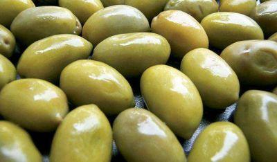 Otro golpe al sector olivícola: el precio internacional cayó un 60%