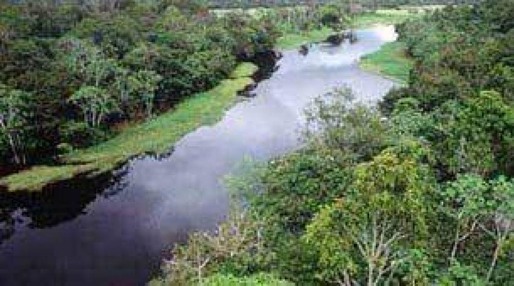 Pagarán a agricultores para que planten árboles en el Amazonas.