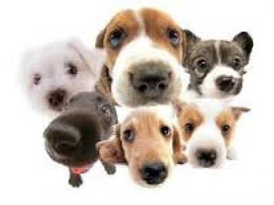 Iniciarán en la ciudad una campaña de castración de perros