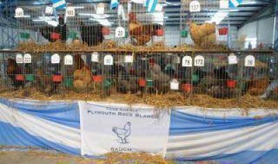 Rauch: 42° Exposición de Avicultura
