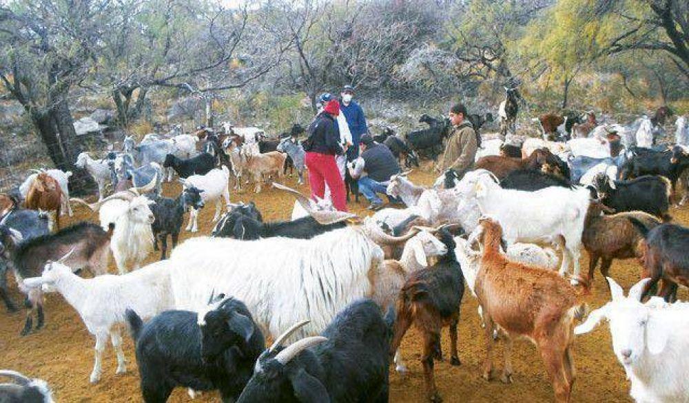Estiman que se duplicará la ayuda para productores caprinos y ovinos