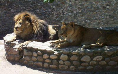 Impulsan prohibir los zool�gicos en la provincia de C�rdoba